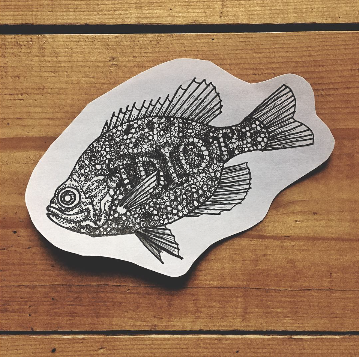 Poisson illustration Charlotte Rex